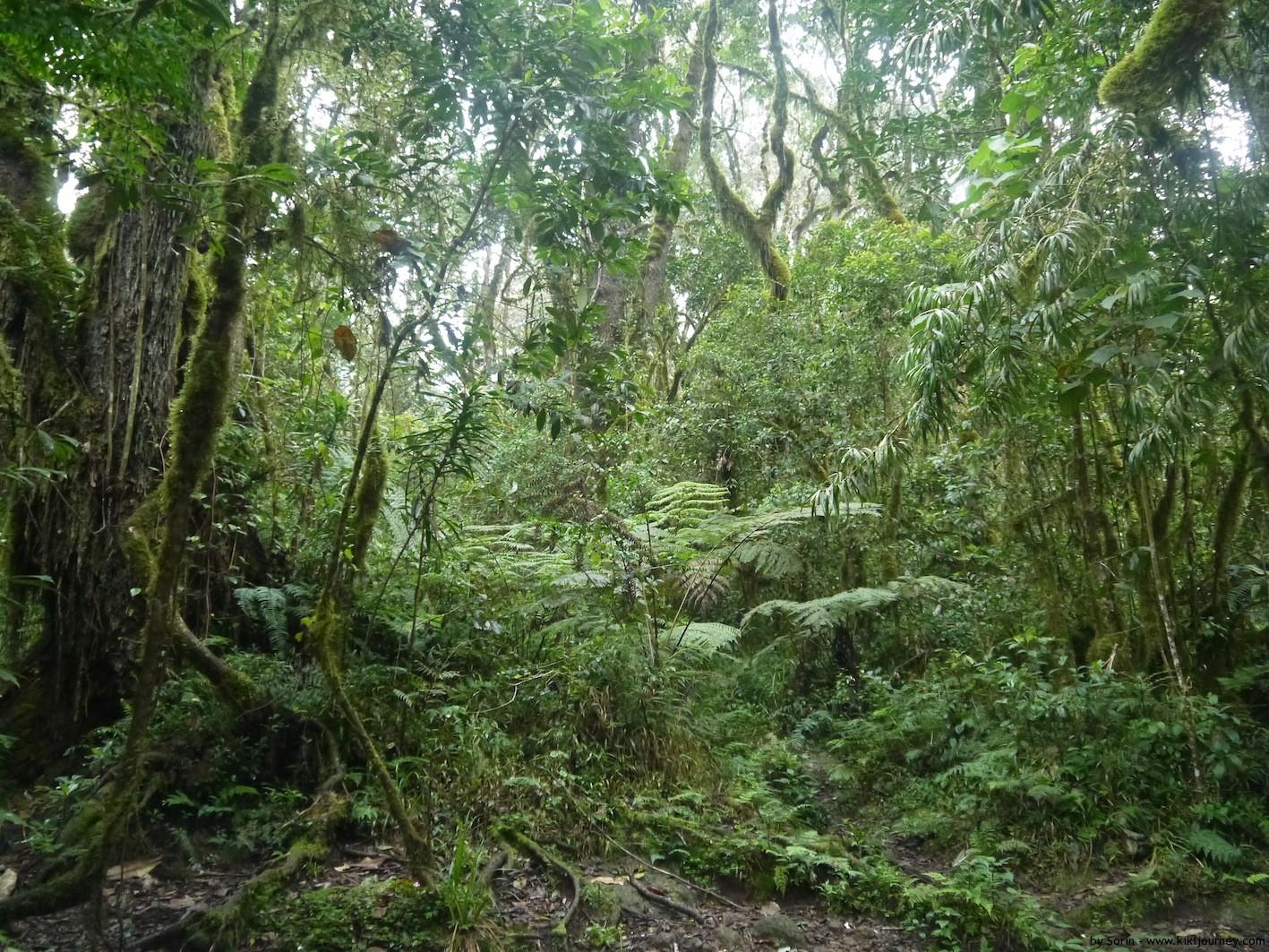 Rain Forest Machame Route Kilimanjaro