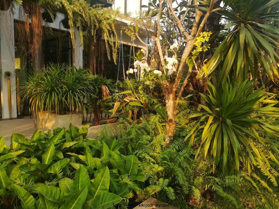 Luxuriant Plants
