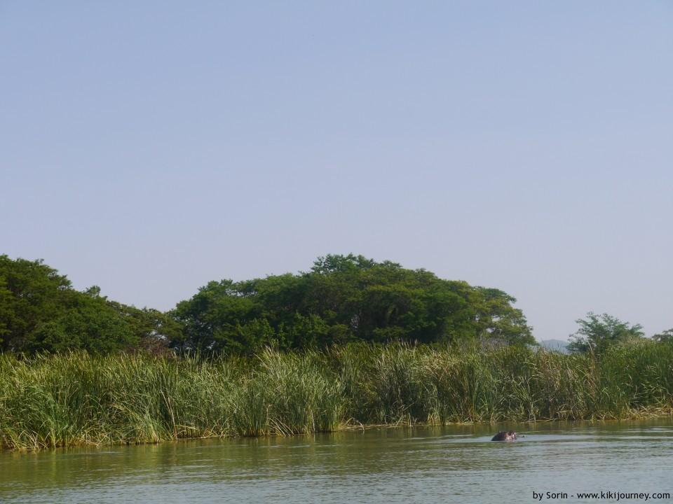 hippos at Chomo Lake Ethiopia