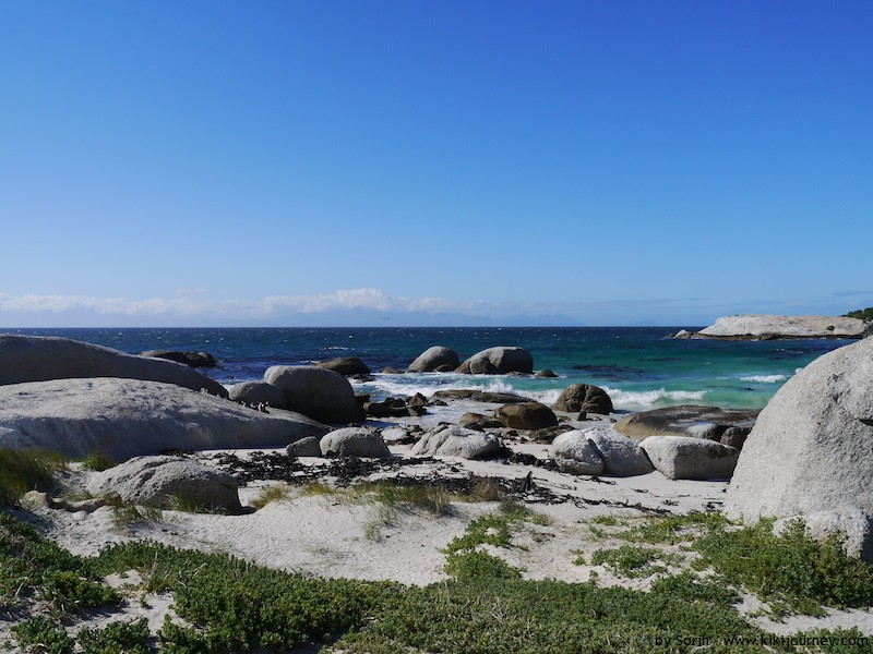 boulders beach cape town penguins