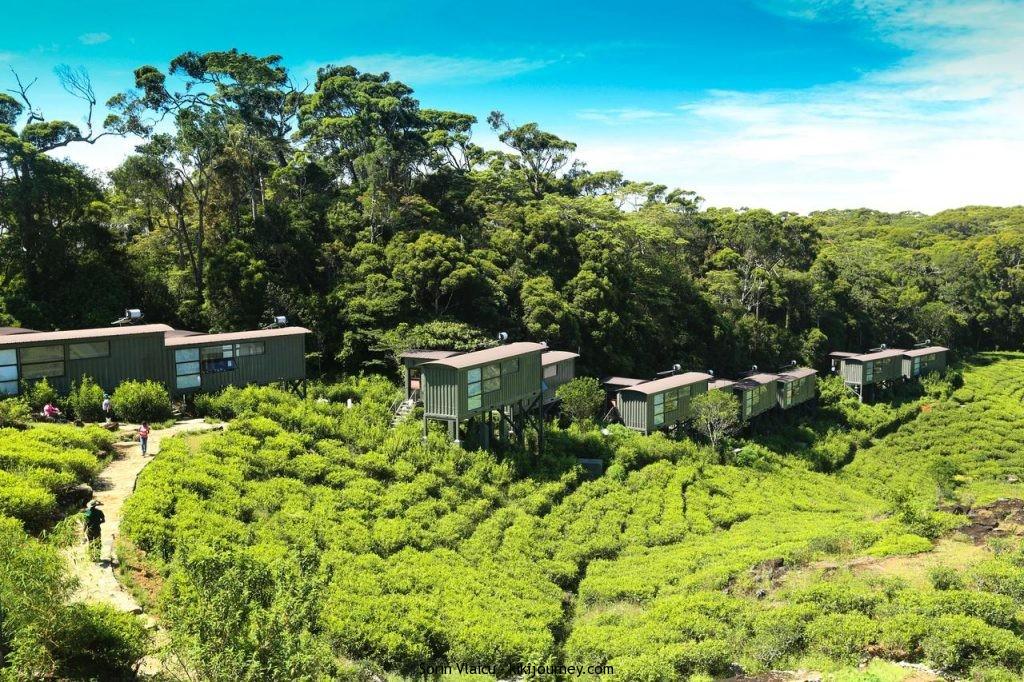The Rainforest Ecolodge